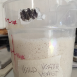 The wild yeast water fase 3